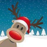 鲁道夫驯鹿红色鼻子和帽子 库存照片