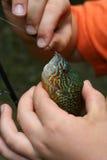 鲂儿童捕鱼 免版税库存图片