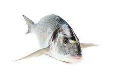 鲂鱼镀金面迎浪 图库摄影