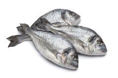 鲂鱼镀金面题头 库存图片