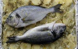 鲈鱼、土豆和香料 图库摄影