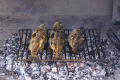 鲈鱼烤了在钢格栅ba的传统达尔马希亚方式 免版税库存图片