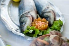 鲈鱼   免版税库存照片