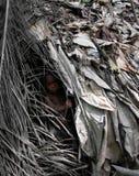 鲍卡Dja储备的,喀麦隆矮人孩子画象  库存图片