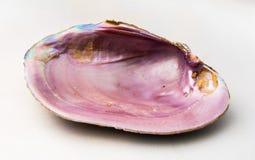 鲍鱼(Pao华海运壳)的桃红色颜色 库存图片