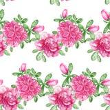 鲕梨 与桃红色花的无缝的样式在白色 库存照片
