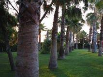 鲜亮的棕榈树大道在热带庭院的 免版税图库摄影
