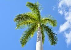 鲜亮的棕榈树 免版税库存照片