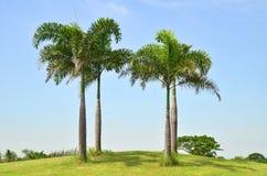 鲜亮的棕榈树 免版税库存图片