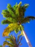 鲜亮的棕榈 免版税库存照片
