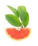 鲜红色的葡萄柚 免版税库存图片