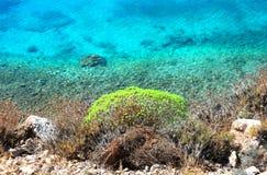 鲜绿色希腊海运 免版税库存照片