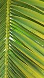 鲜绿色棕榈叶叶状体设置了反对清楚的蓝天 库存图片