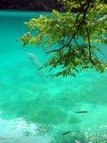 鲜绿色水 免版税库存图片