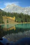 鲜绿色湖反映 库存照片