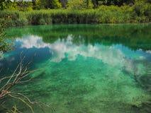 鲜绿色湖在夏天 免版税库存照片