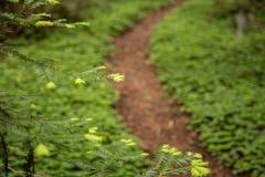 鲜绿色的三叶草和蕨在森林里 免版税库存照片