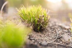 鲜绿色的丛草 库存照片