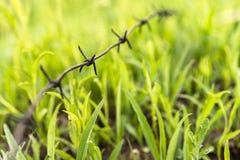鲜绿色的丛草 免版税库存图片