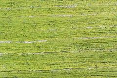 鲜绿色的剥的油漆纹理 库存照片