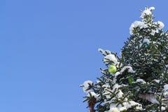 鲜绿色的发光的圣诞节球和其他圣诞节装饰在生长在公园多雪的冷杉拉特的分支 受苦agains 免版税库存照片