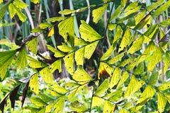 鲜绿色的叶子 免版税库存图片