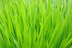 鲜绿色的叶子 免版税图库摄影