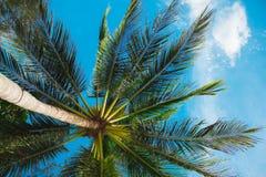 鲜绿色的在浅绿色的被弄脏的背景的叶子热带蕨 与bokeh的特写镜头 美丽的布什在热带庭院里 库存图片