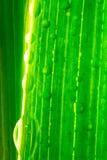 鲜绿色的宏观工厂 免版税图库摄影