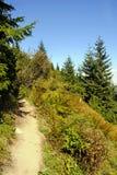 鲜绿色的山在夏天 免版税图库摄影