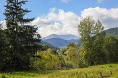 鲜绿色的山在夏天 免版税库存图片