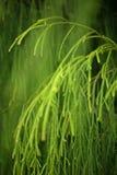 鲜绿色的工厂叶子 免版税库存照片