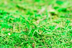 鲜绿色的鲜绿色青苔摘要背景 森林自然 图库摄影
