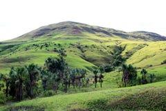 鲜绿色草, Gran Sabana委内瑞拉 库存照片
