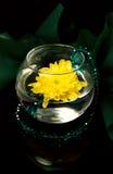 鲜绿色菊花 库存照片