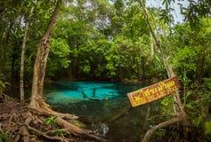 鲜绿色蓝色水池, Krabi 免版税库存照片