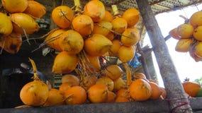 鲜美国王椰子待售 库存图片
