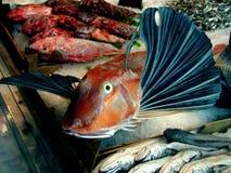 鲜美栖息处鱼在义卖市场叫木盆鲂鱼在巴勒莫 免版税库存照片