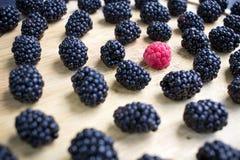鲜美水多的莓果套许多黑莓和一个莓 免版税库存照片