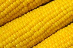 鲜美煮沸的玉米向日葵对角地-宏指令 库存照片
