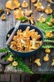 鲜美狂放的黄蘑菇蘑菇在秋天收集了 免版税库存图片