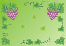 鲜美的葡萄 库存照片