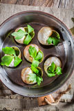 鲜美蜗牛用大蒜黄油 图库摄影