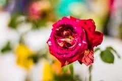 鲜花美丽明亮 免版税库存图片