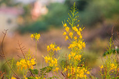 鲜花美丽明亮 库存照片