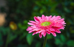 鲜花美丽明亮 免版税图库摄影