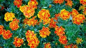 鲜花黄色美好的背景 免版税库存图片