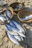 鲜鱼和金枪鱼在篮子在海滩 免版税图库摄影