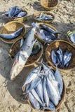 鲜鱼和金枪鱼在篮子在海滩 免版税库存照片
