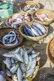 鲜鱼和金枪鱼在篮子在海滩 免版税库存图片